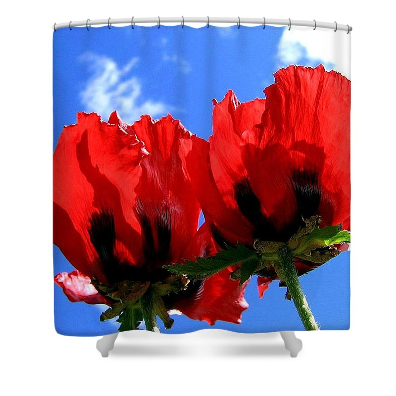 Blue Shower Curtain featuring the photograph Flaming Skies by Will Borden