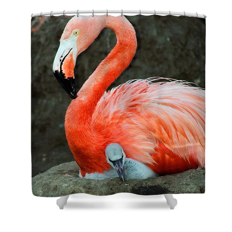 Bird Shower Curtain featuring the photograph Flamingo And Baby by Anthony Jones