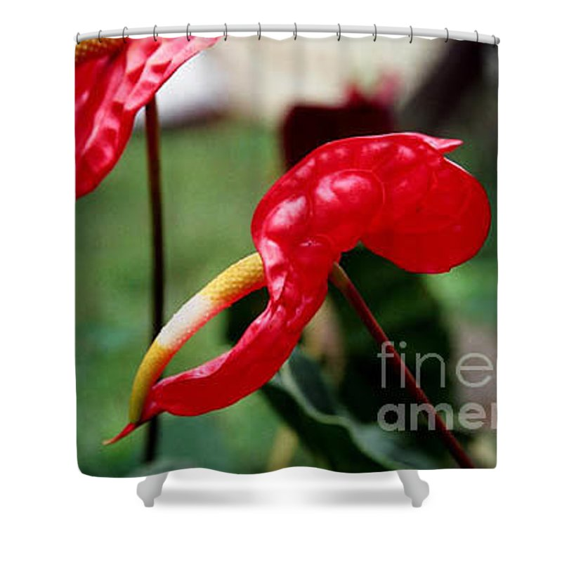 Exotic Flowers Shower Curtain featuring the photograph Flamingo Flower by Kathy McClure