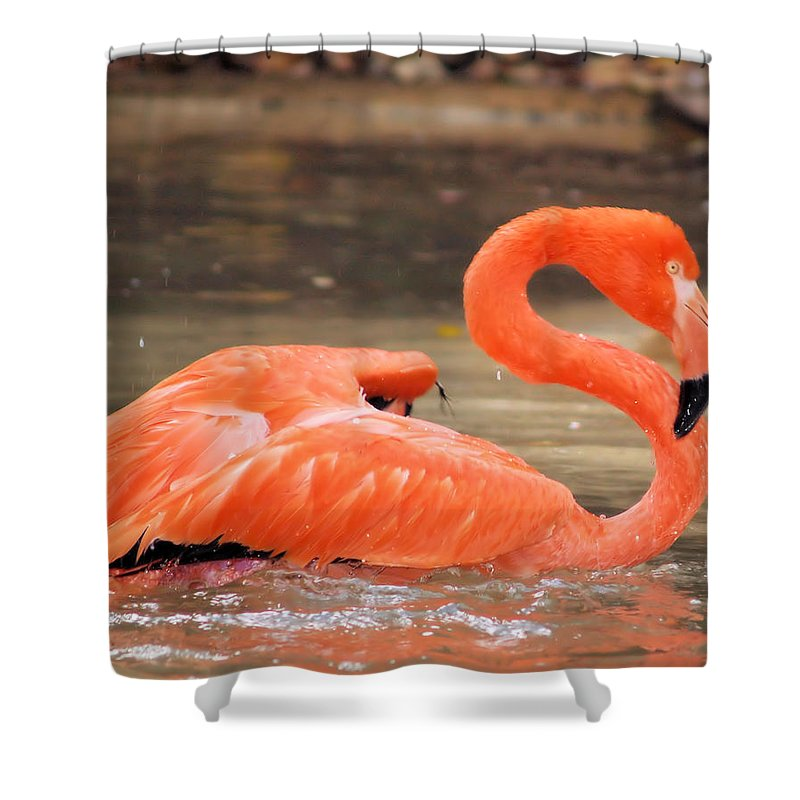 Flamingo Shower Curtain featuring the photograph Flamingo by Gaby Swanson
