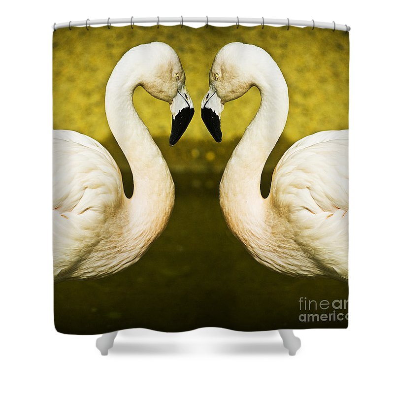 Flamingo Shower Curtain featuring the photograph Flamingo Reflection by Sheila Smart Fine Art Photography