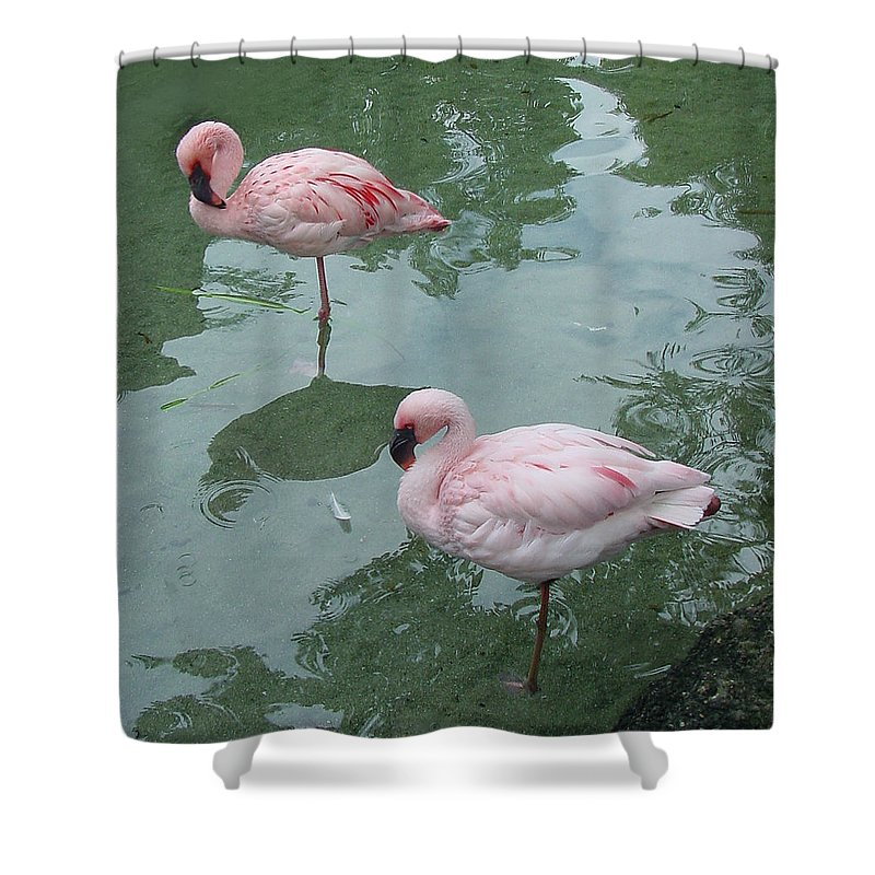 Wildlife Shower Curtain featuring the photograph Flamingoes Posing by Shirley Heyn