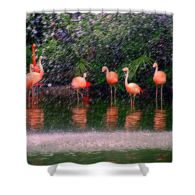Flamingos Shower Curtain featuring the photograph Flamingos II by Susanne Van Hulst