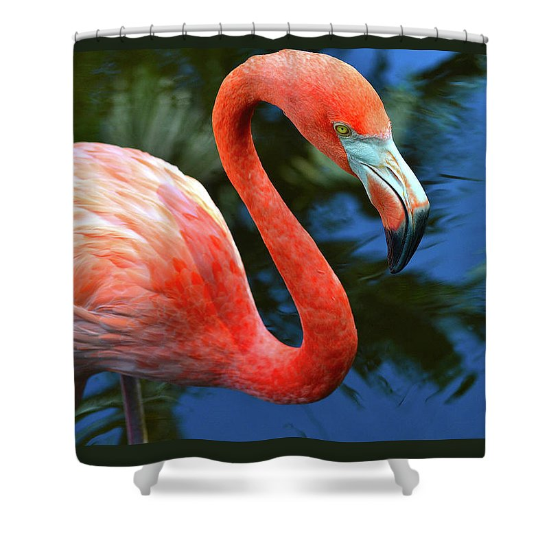 Closeup Shower Curtain featuring the photograph Flamingo Wading In Pond by Krista Russell