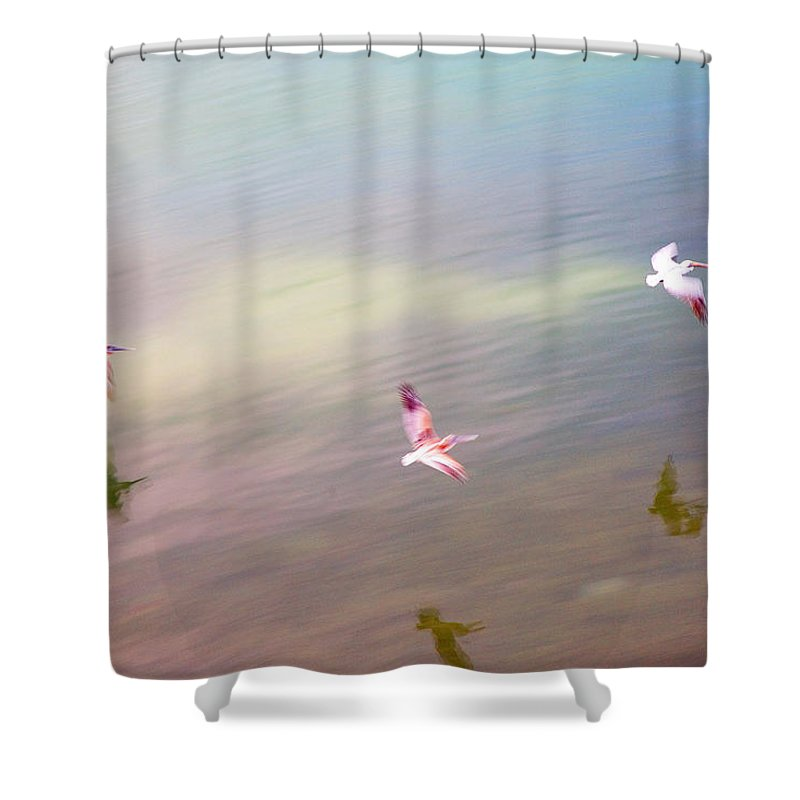 Pelicans Shower Curtain featuring the photograph Flight Impressions by Mal Bray