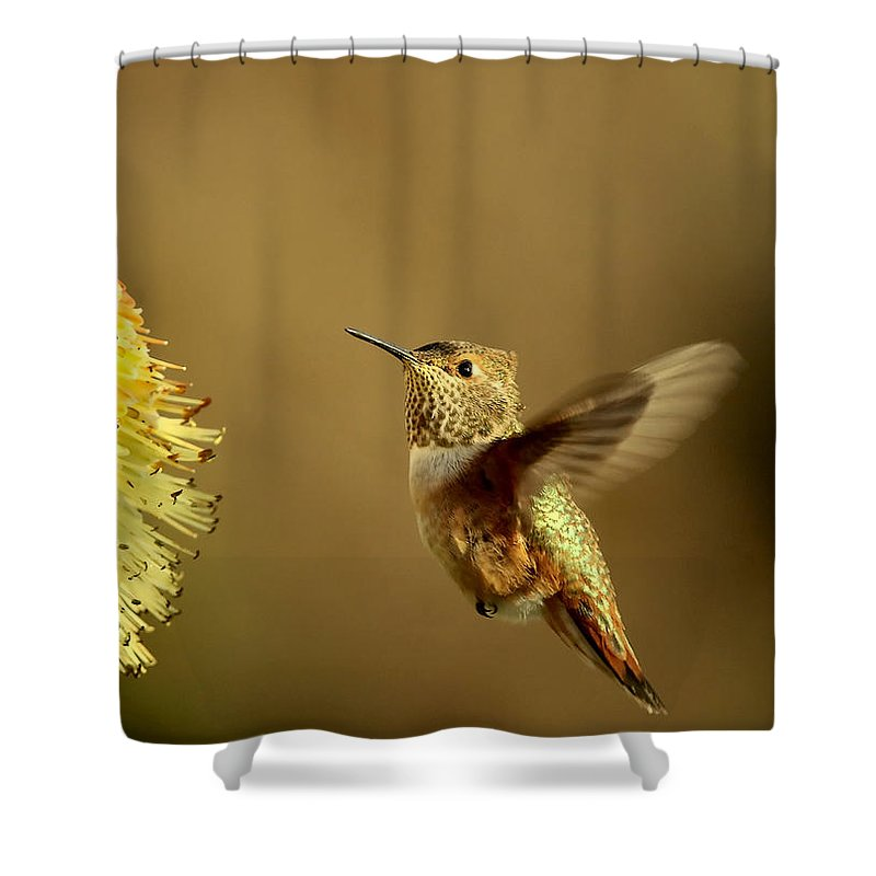 Hummingbird Shower Curtain featuring the photograph Flight Of The Hummer by Mike Dawson