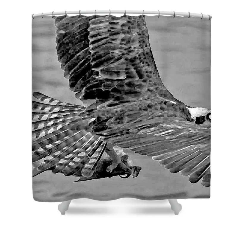 Pelican Shower Curtain featuring the photograph Flight Of The Osprey Bw by Michael Thomas