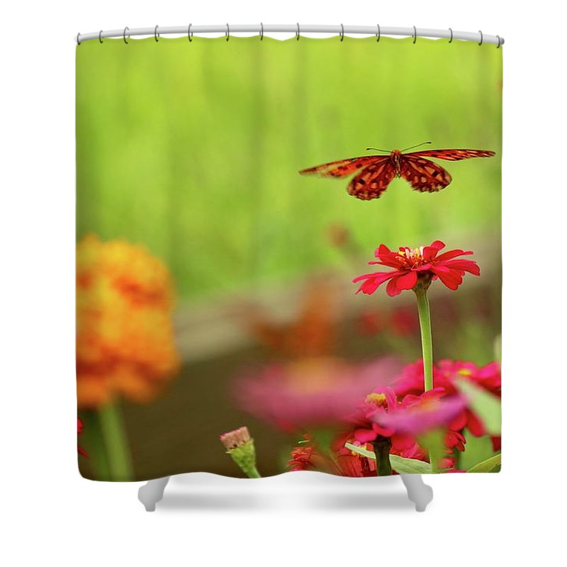 Butterfly Shower Curtain featuring the photograph Float Like A Butterfly by Beverly Cummiskey