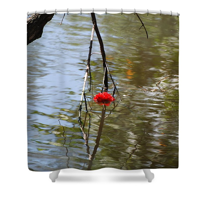 Water Shower Curtain featuring the photograph Floating Flower by Rob Hans