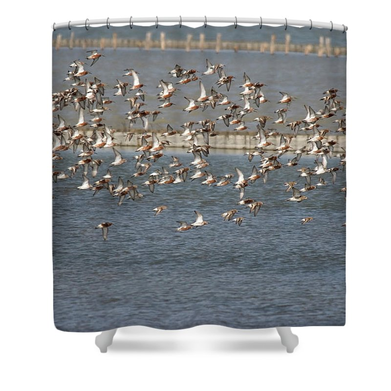 River Life Shower Curtain featuring the photograph Flock Of Birds In Flight by Cliff Norton