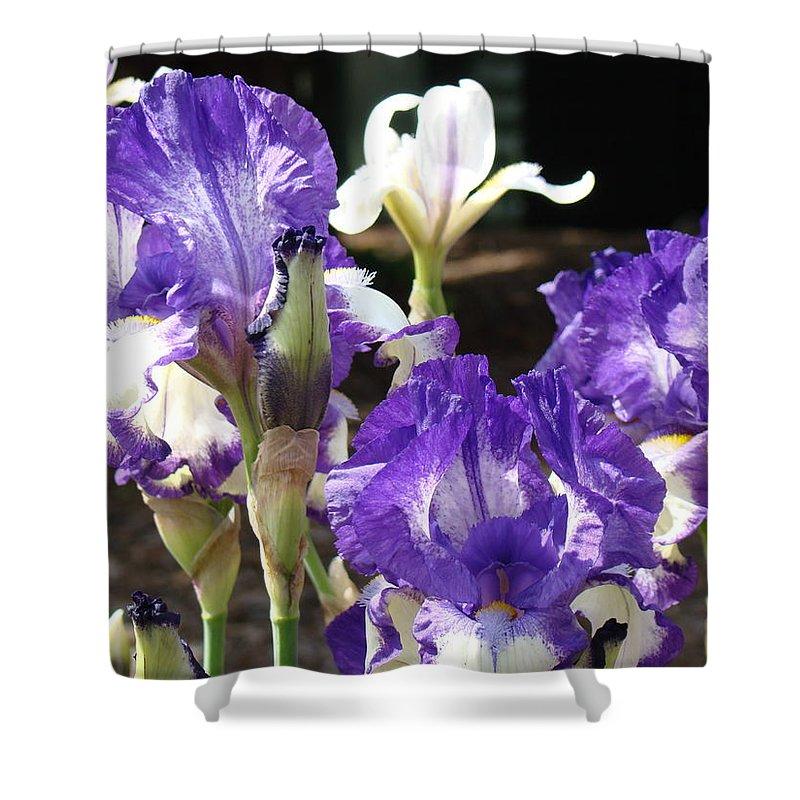 �irises Artwork� Shower Curtain featuring the photograph Flora Bota Irises Purple White Iris Flowers 29 Iris Art Prints Baslee Troutman by Baslee Troutman