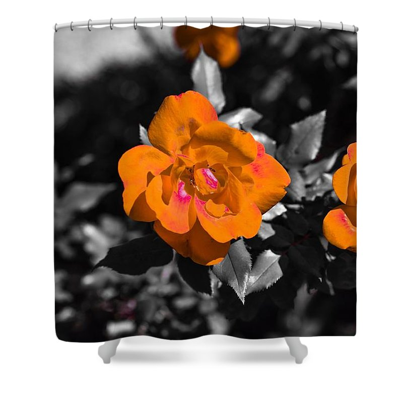 Flowers Roses Chris Frasier Shower Curtain featuring the photograph Floral Beauty by Chris Frasier
