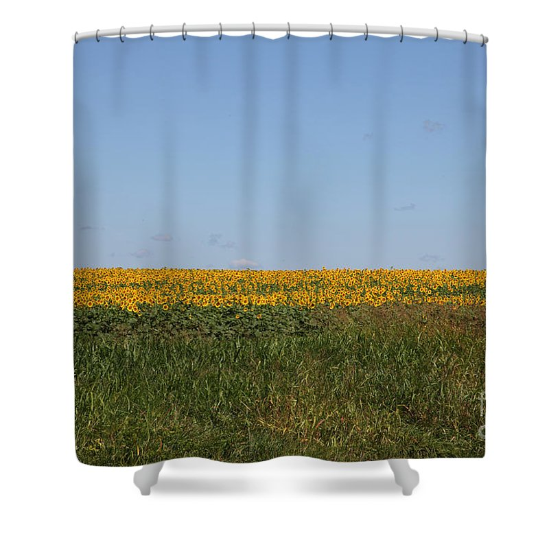 Sunflowers Shower Curtain featuring the photograph Floral Blur by Amanda Barcon