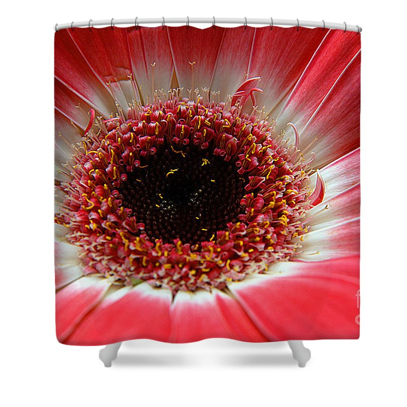 Clay Shower Curtain featuring the photograph Floral Eye by Clayton Bruster