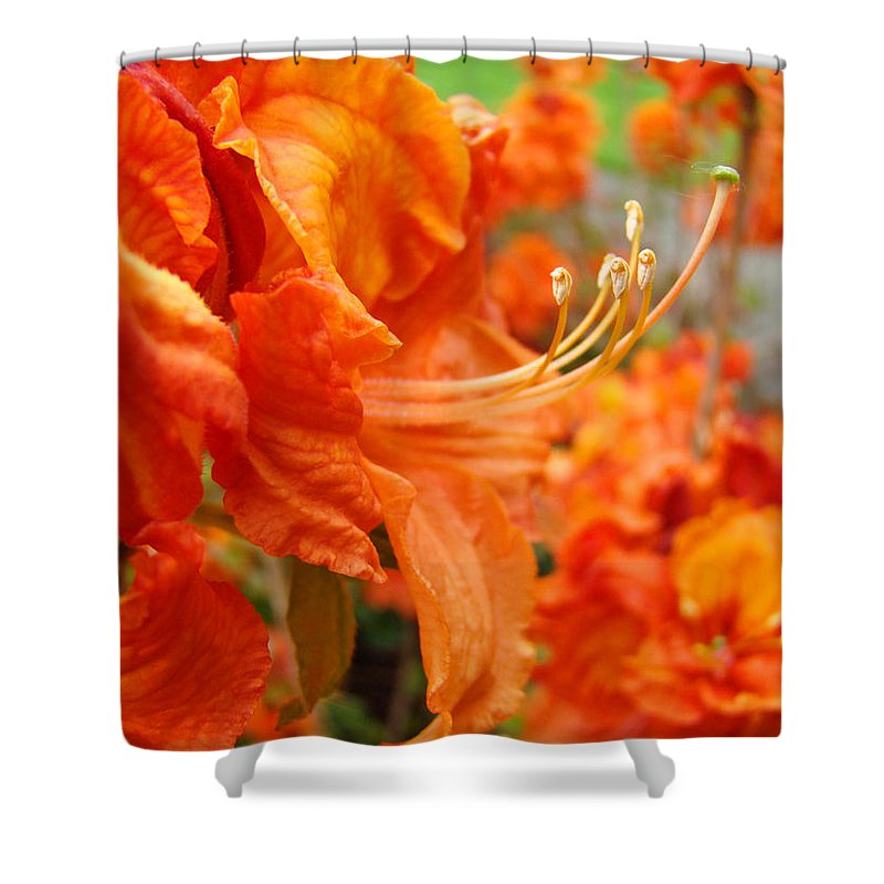 Rhodies Shower Curtain featuring the photograph Floral Garden Art Prints Orange Rhododendrons Baslee Troutman by Baslee Troutman