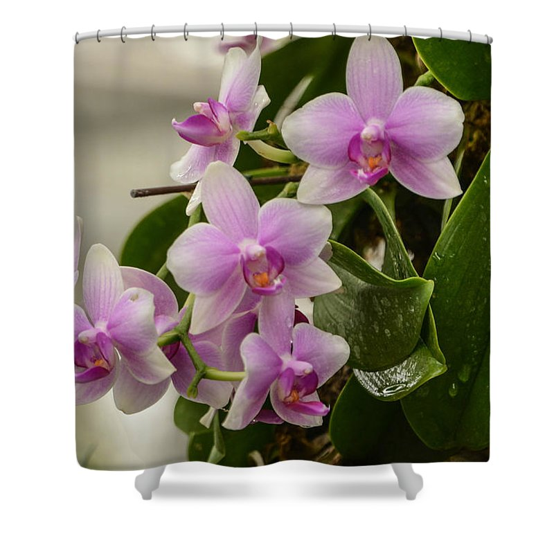 Orchids Shower Curtain featuring the photograph Floral Hangup by Robert Coffey