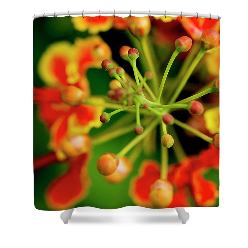 Macro Shower Curtain featuring the photograph Floral Macro by Joveria Wajih