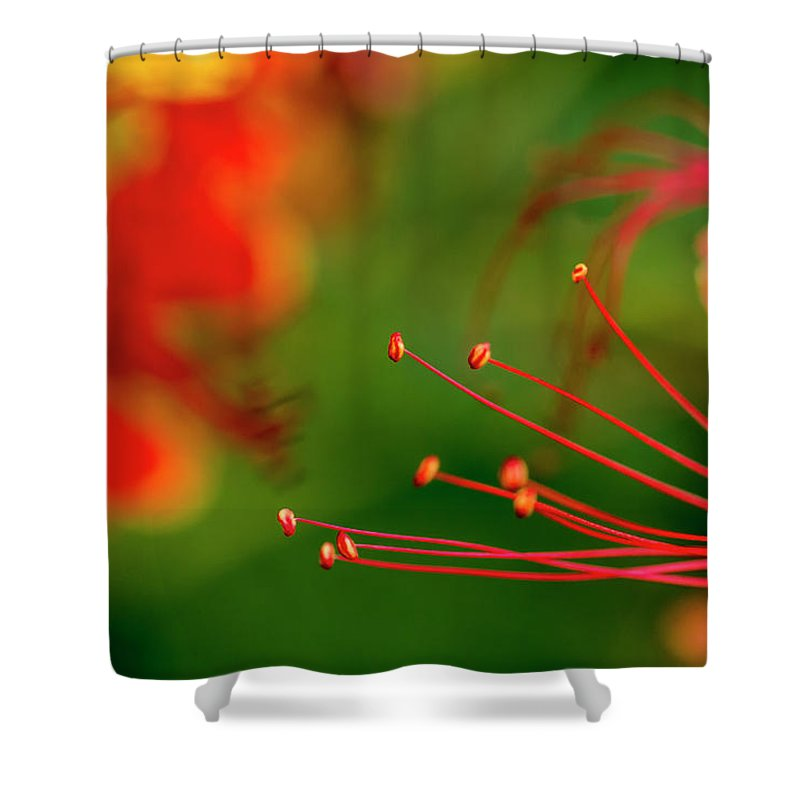 Nature Shower Curtain featuring the photograph Florals by Joveria Wajih