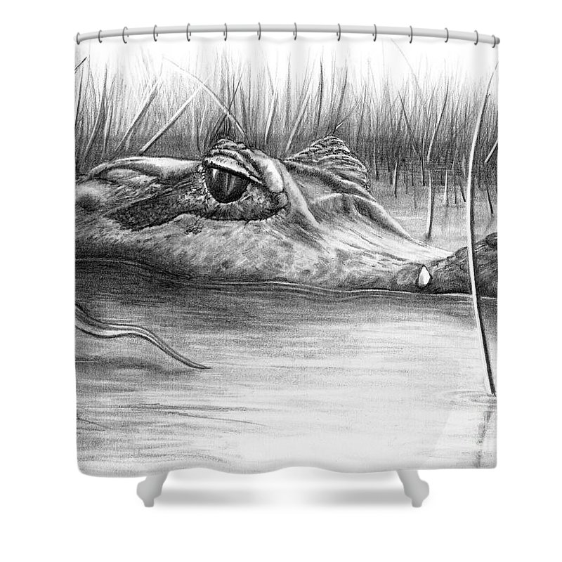Alligator Shower Curtain Featuring The Drawing Florida Gator By Murphy Elliott