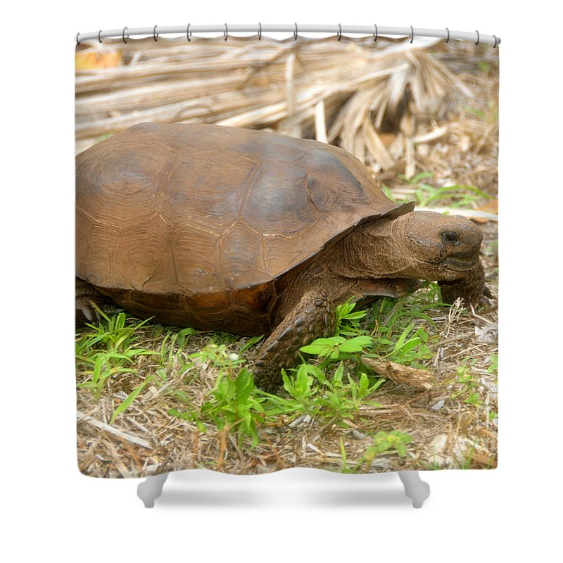 Florida Shower Curtain featuring the photograph Florida Gopher Tortoise by David Lee Thompson
