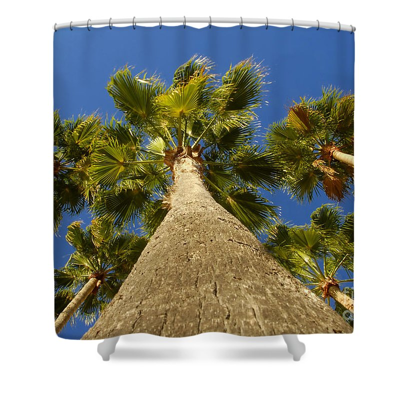 Florida. Palm Trees. Tropical Shower Curtain featuring the photograph Florida Palms by David Lee Thompson