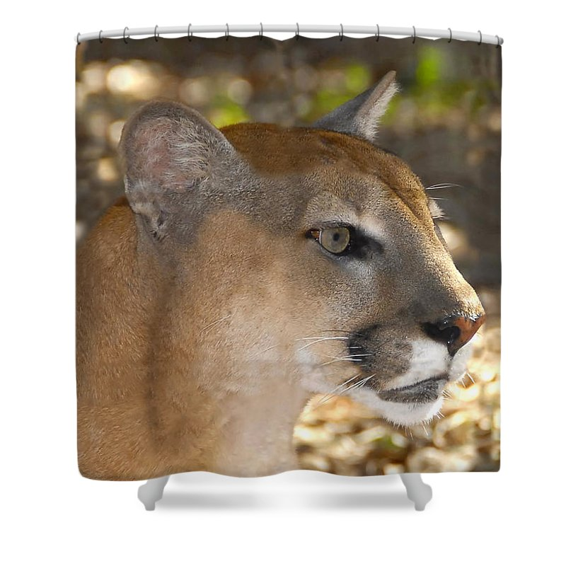 Florida Shower Curtain featuring the photograph Florida Panther by David Lee Thompson