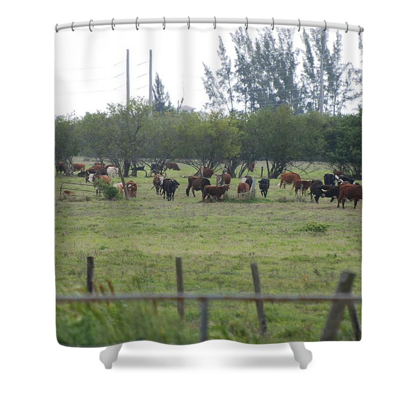 Trees Shower Curtain featuring the photograph Florida Ranch by Rob Hans