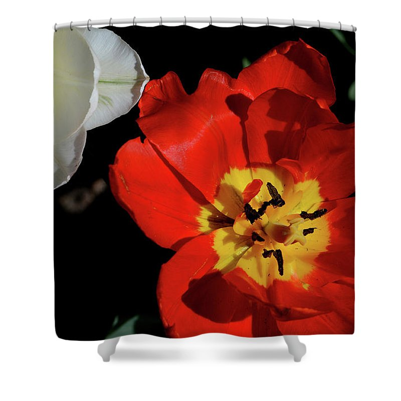 Flowers Shower Curtain featuring the photograph Flower 55 by David Gilbert