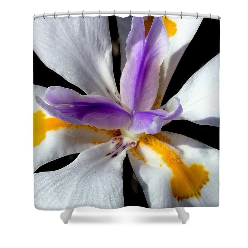 Flowers Shower Curtain featuring the photograph Flower by Anthony Jones
