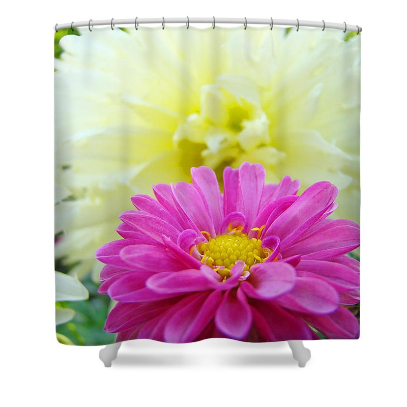 Dahlia Shower Curtain featuring the photograph Flower Art Print White Pink Dahlia Floral Canvas Baslee Troutman by Baslee Troutman