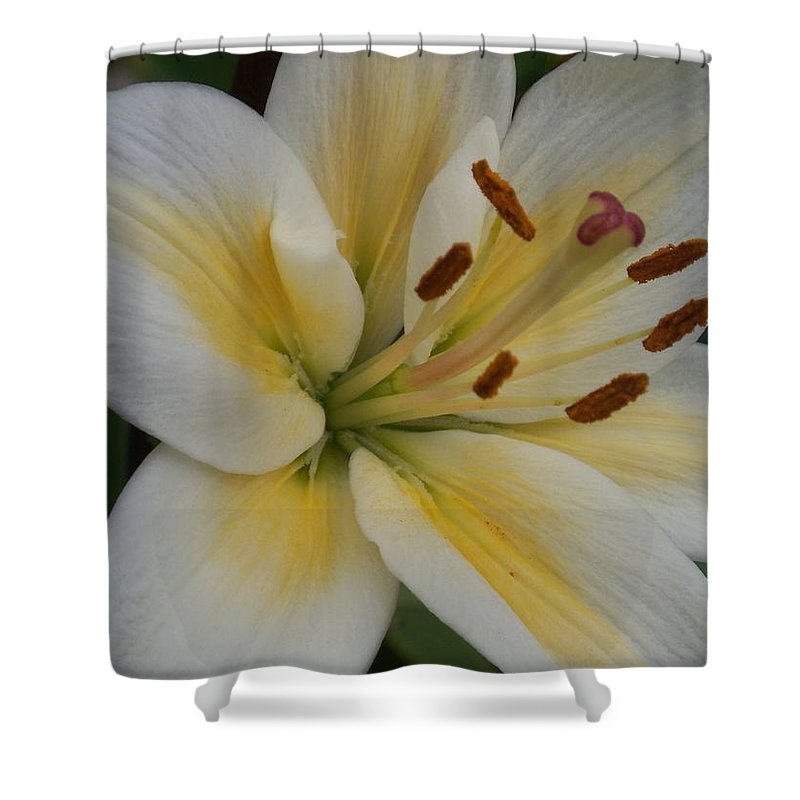Flower Shower Curtain featuring the photograph Flower Close Up 1 by Anita Burgermeister