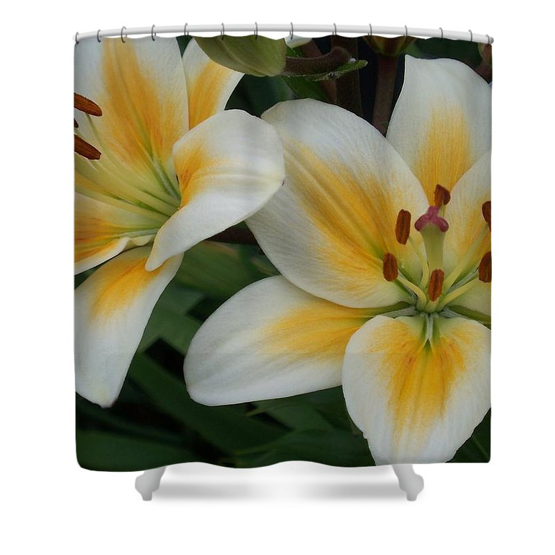 Flower Shower Curtain featuring the photograph Flower Close Up 2 by Anita Burgermeister