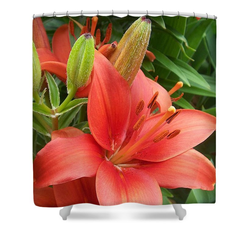 Flower Shower Curtain featuring the photograph Flower Close Up 4 by Anita Burgermeister