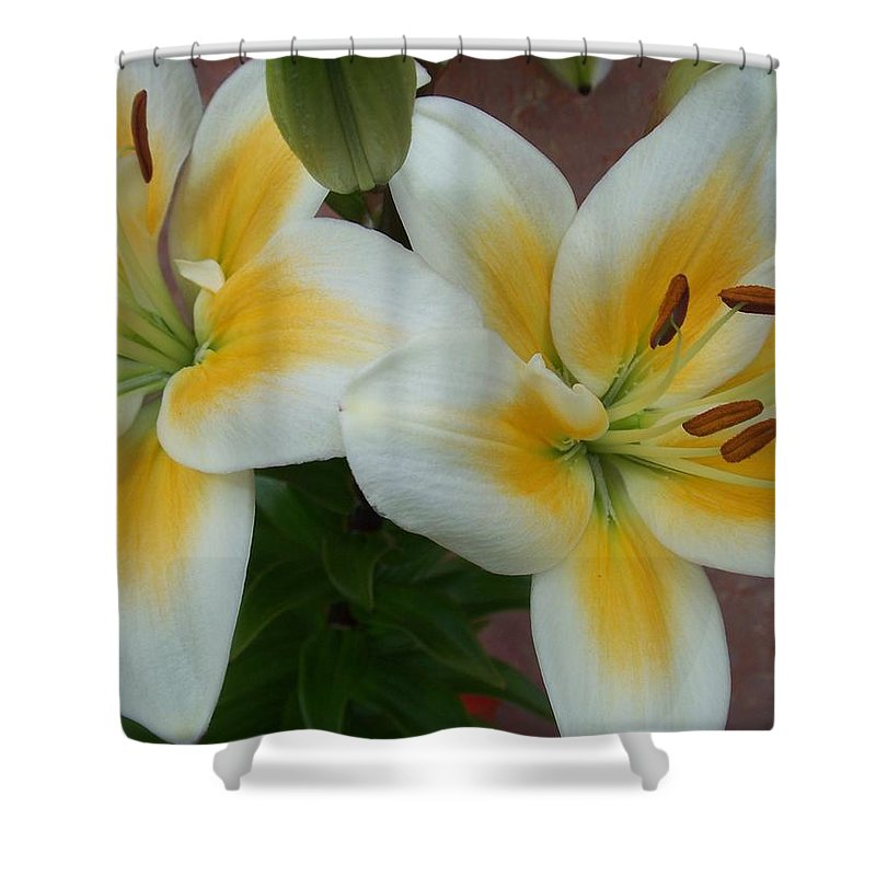 Flower Shower Curtain featuring the photograph Flower Close Up 5 by Anita Burgermeister
