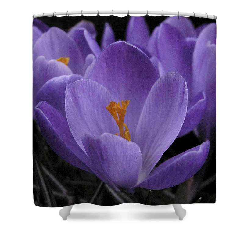 Flowers Shower Curtain featuring the photograph Flower Crocus by Nancy Griswold