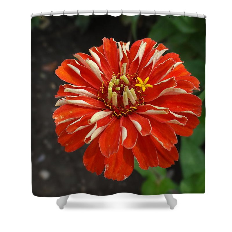 Flower Shower Curtain featuring the photograph Flower by Dritan Zaimi