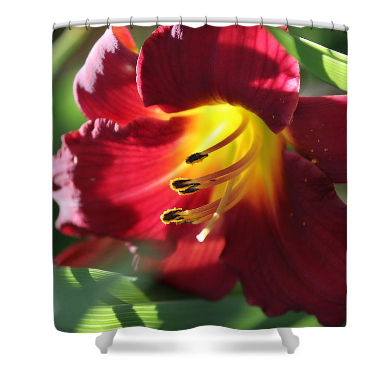 Nature Shower Curtain featuring the photograph Flower by Lisa Spero
