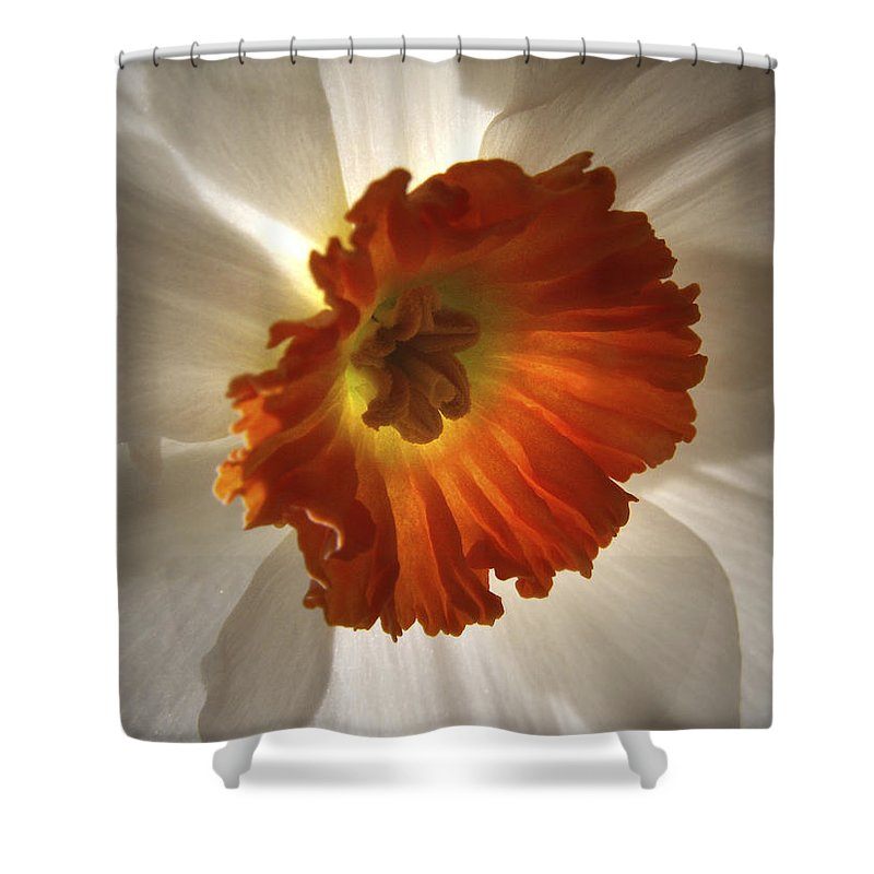 Flowers Shower Curtain featuring the photograph Flower Narcissus by Nancy Griswold