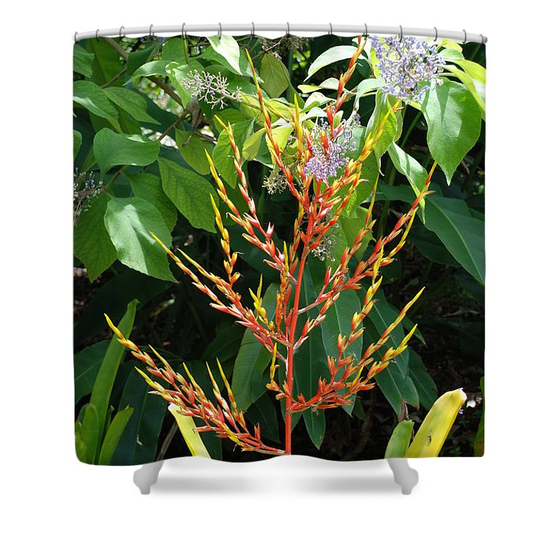 Macro Shower Curtain featuring the photograph Flower Plants by Rob Hans