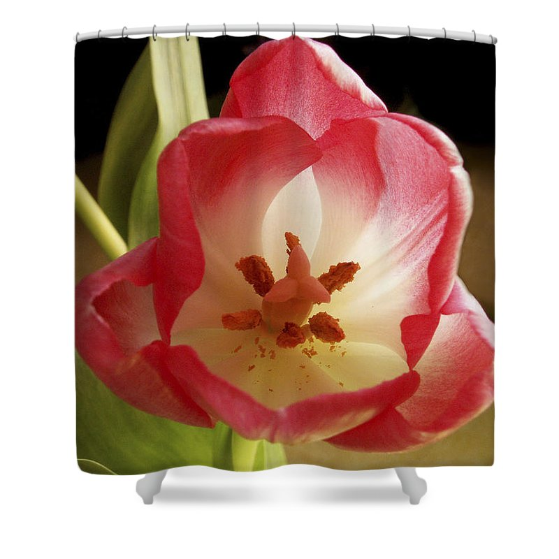Flowers Shower Curtain featuring the photograph Flower Tulip by Nancy Griswold