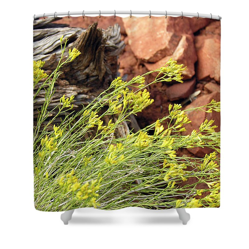 Flower Shower Curtain featuring the photograph Flower Wood And Rock by Marilyn Hunt