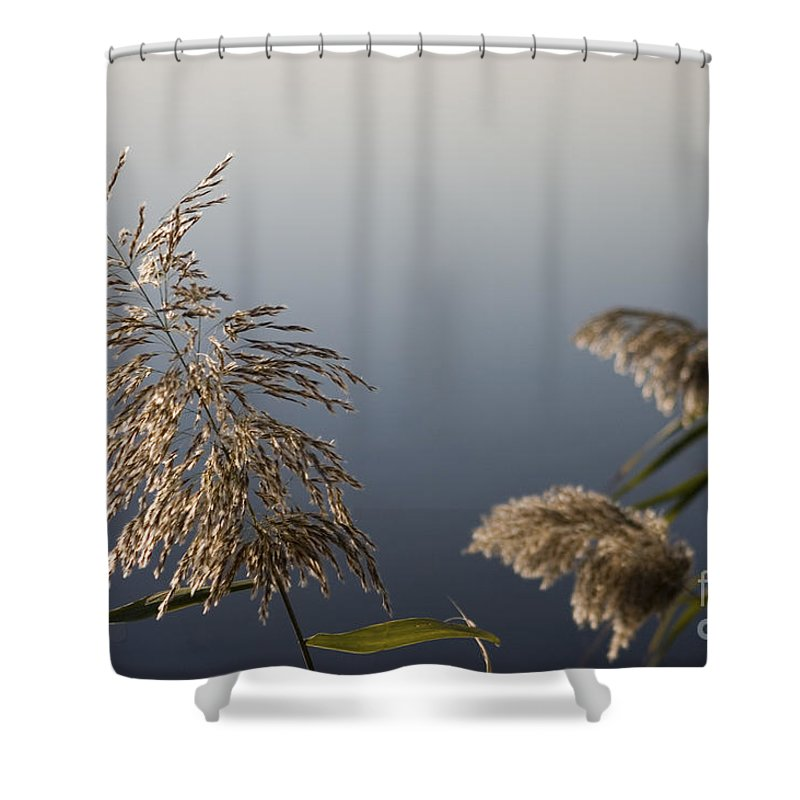 Nature Shower Curtain featuring the photograph Flowering Cane Plant by Nahum Budin