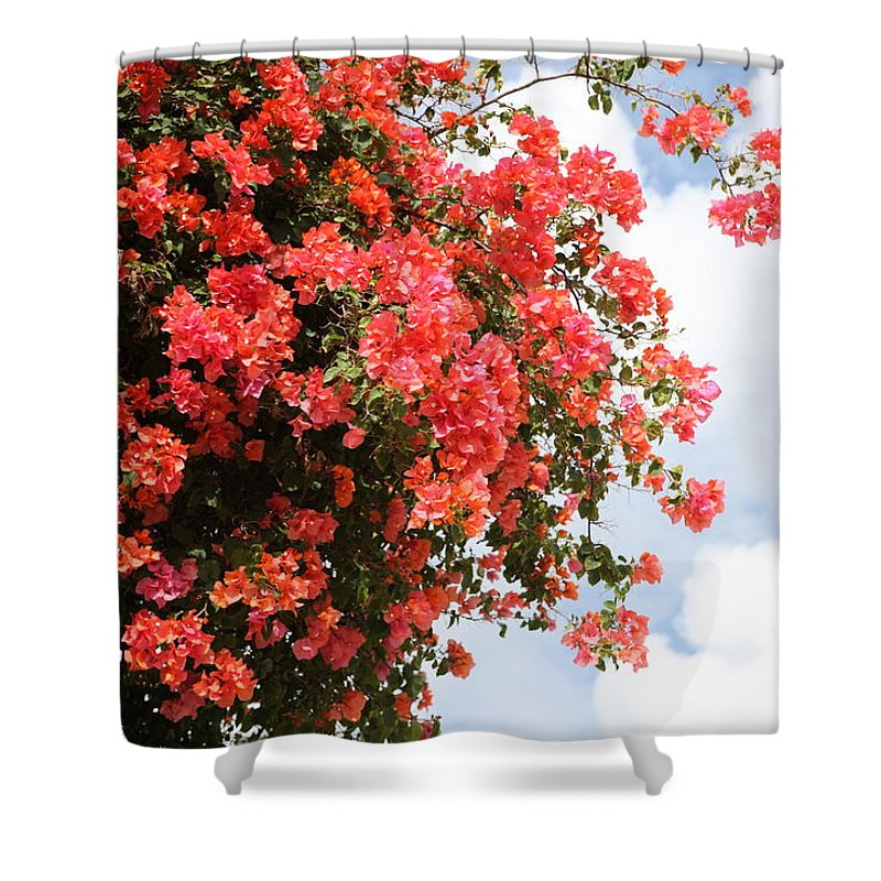 Hawaii Shower Curtain featuring the photograph Flowering Tree by Nadine Rippelmeyer