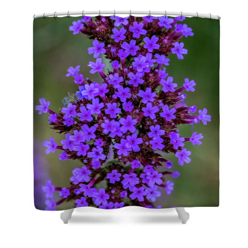 Flower Shower Curtain featuring the photograph Flower_lavender 1072v by Doug Berry