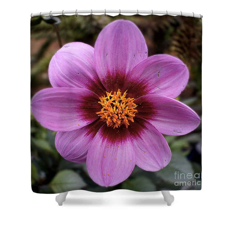 Flowers Shower Curtain featuring the photograph Flowers 65 by Ben Yassa