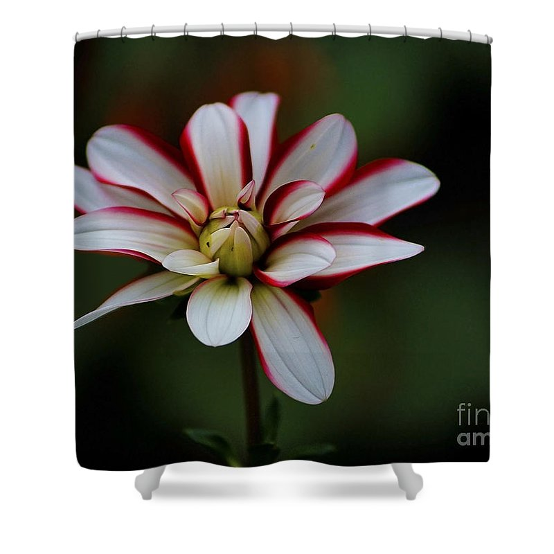 Flowers Shower Curtain featuring the photograph Flowers 66 by Ben Yassa
