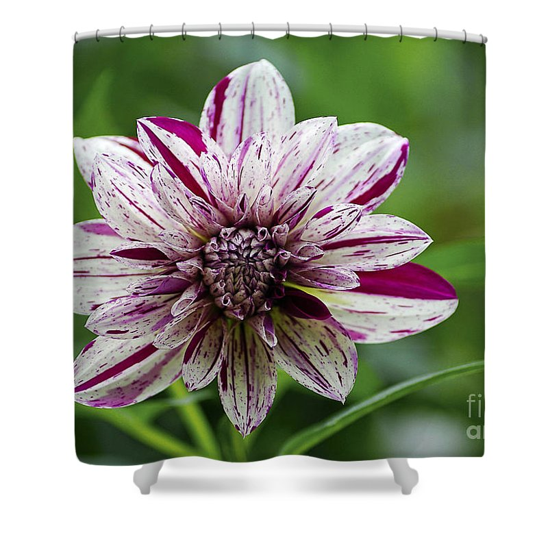 Flowers Shower Curtain featuring the photograph Flowers 70 by Ben Yassa