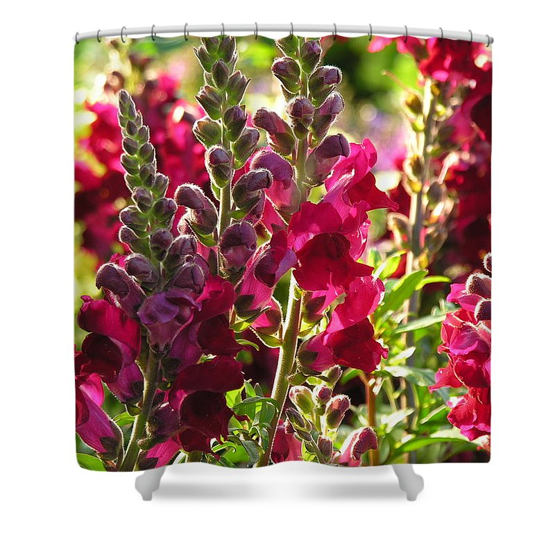 Flowers Shower Curtain featuring the photograph Flowers by Diane Greco-Lesser