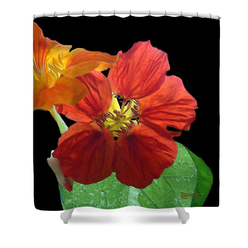 Nasturtiums Shower Curtain featuring the painting Flowers For Ebie by RC DeWinter