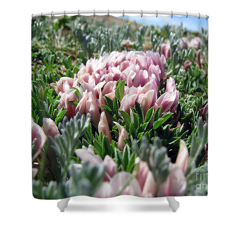 Flowers Shower Curtain featuring the photograph Flowers In The Alpine Tundra by Amanda Barcon